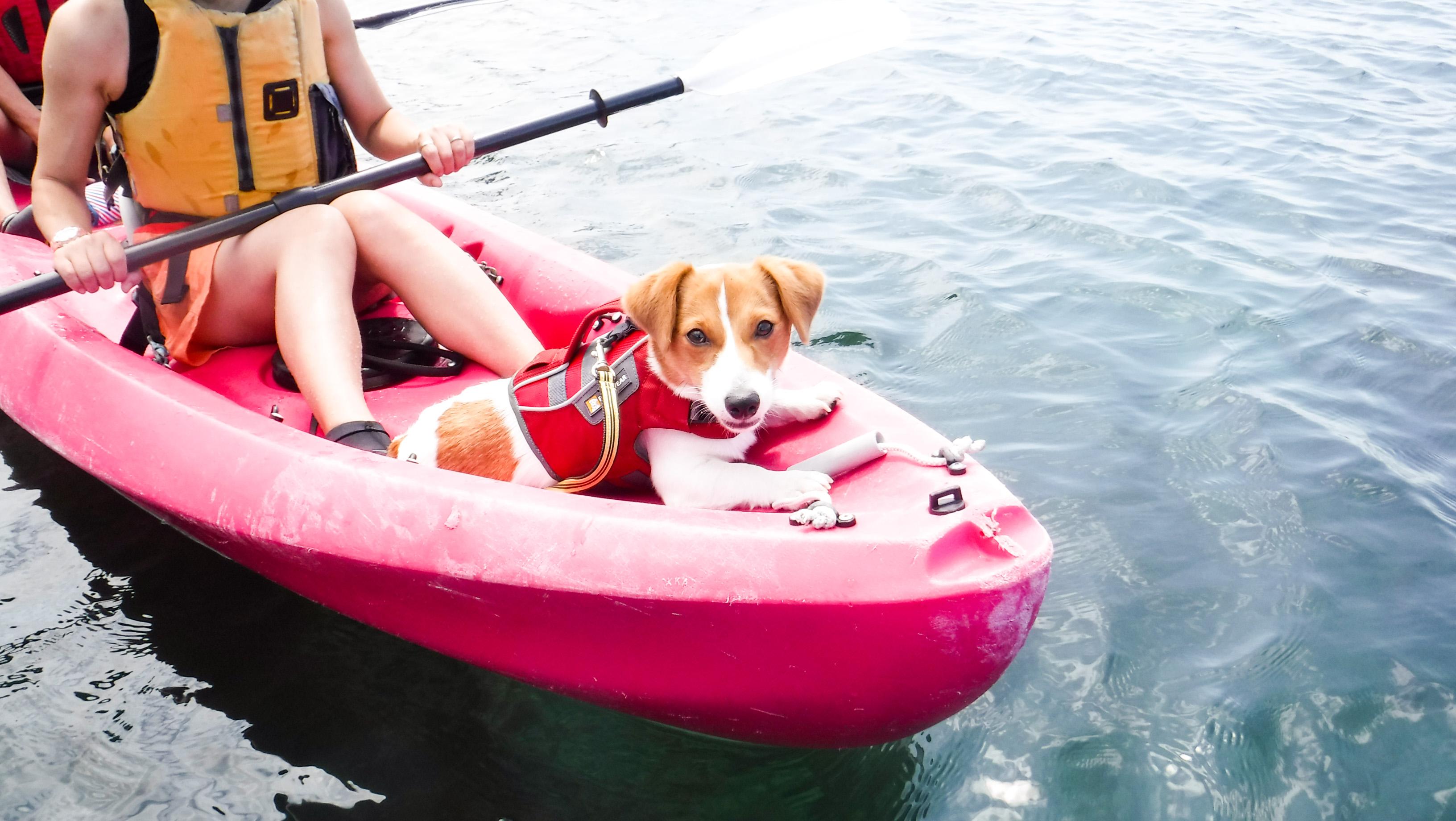 ワンちゃんと一緒にSUP kayak
